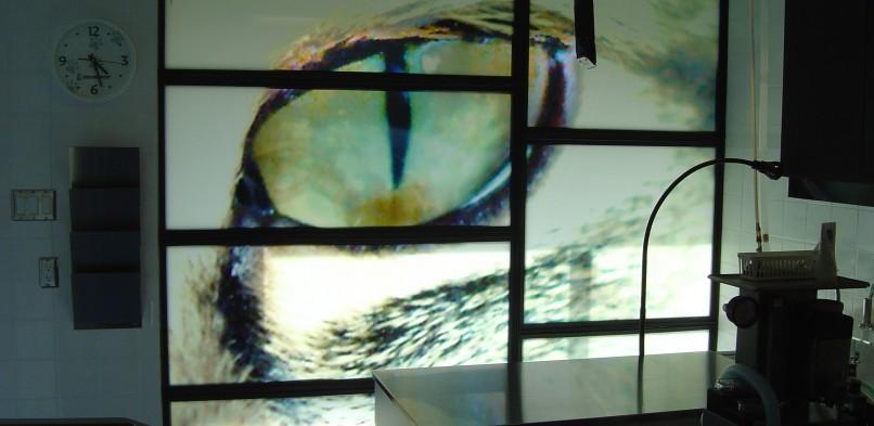 Veterinary Window Film
